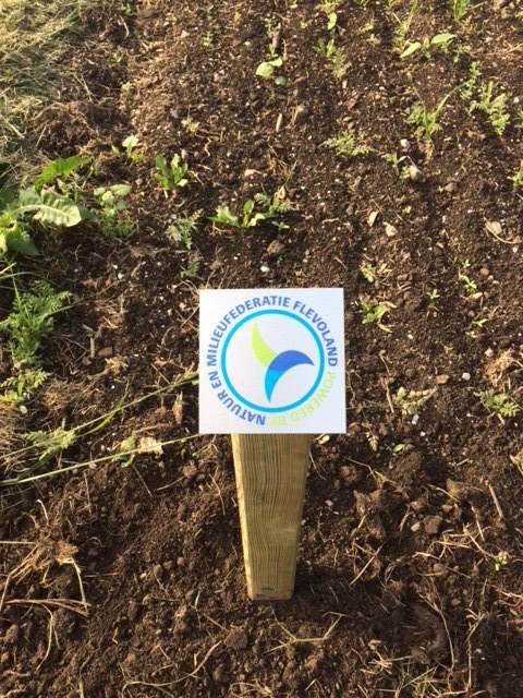 NMFF Fonds Verbraaken: Bloemenweide in het Wisentbos